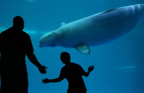 Shedd reopens to the public