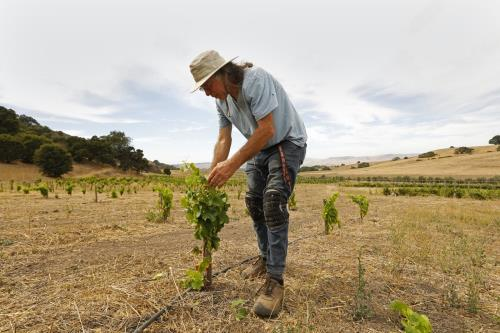 For winemakers, climate presents a blend of problems